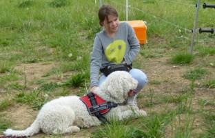 Fuego del norte perro de agua espanol for Koch eislingen
